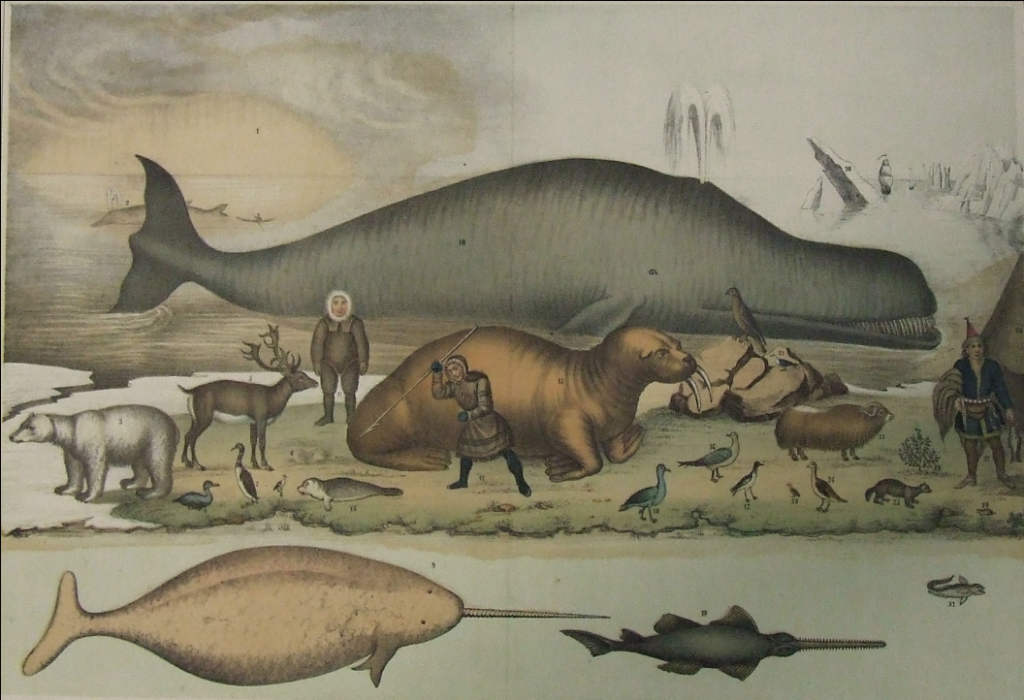 Lithograph of animals found in the Arctic North from 1851.