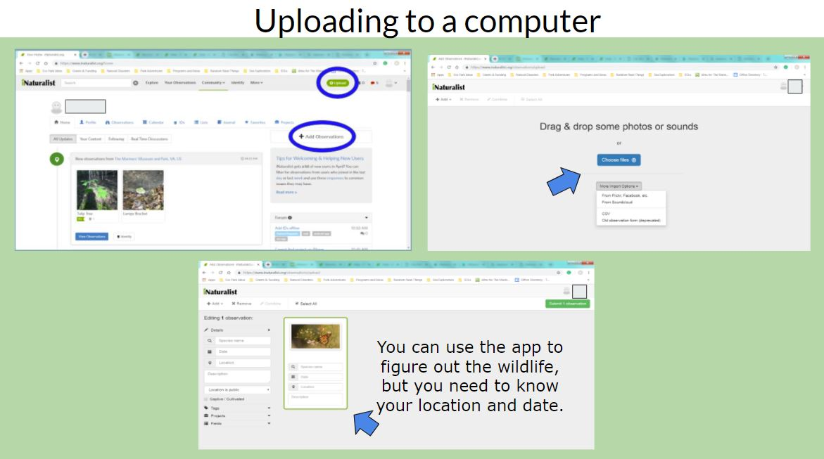 Uploading your images through the iNaturalist website.