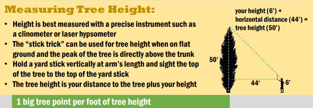 Infographic on how to measure a tree's height